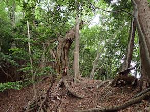 自然林となる