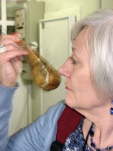 Photo: Pat sniffs the rennet (comes from sheep's stomach) used for making cheese.  Rennet turns milk into curds and whey.