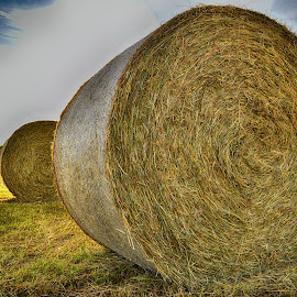 Hay Bales On The Field by Marco Bertamé - Landscapes Prairies, Meadows & Fields ( hay bale )