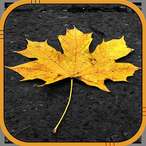 个人化の秋ライブ壁紙 LOGO-記事Game