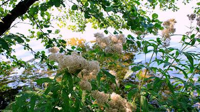 Photo: Uferpflanzen am Ostufer des Großensees