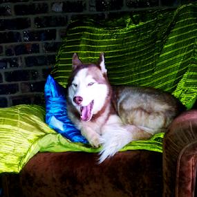 yaawwwnnn..... by Gerrit Symons - Animals - Dogs Portraits