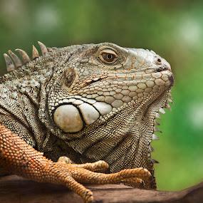 by Metka Hiti - Animals Reptiles