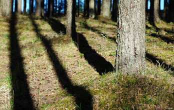 Photo: Evening in the forest.  For #LeadingLinesMonday, curated by +Pam Chalkley, +CJ Sros and +Jakob Nilsson.