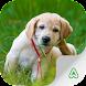 Raças de Cachorros - Androidアプリ