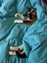 Photo: It's Caturday!!!  It's a grey cool fall day... We should all be tucked in! ------------------------------------------------- ... #Caturday ... the hosts with the most +Lee Daniels & +Christophe Friedli! Really... she tucker herself in... purred so loud and kneaded the air with her tiny paws.... I want to be a cat!