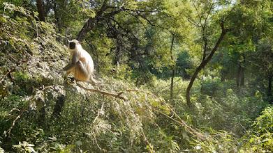 Photo: Und jetzt kommen die Affen