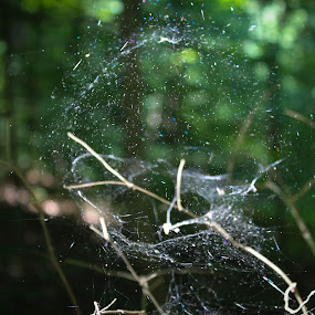 Spider Ball by Erin Heavilin - Nature Up Close Webs
