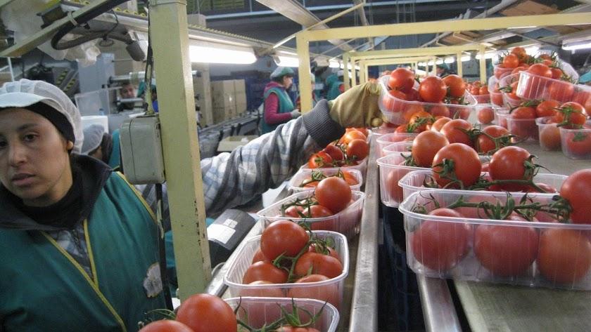 El sector hortofrutícola continúa trabajando sin descanso para dotar de alimentos a todos los hogares durante el confinamiento.