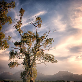 cazneaux tree South Australia by Gary Parnell - Landscapes Prairies, Meadows & Fields ( flinders rages, cazneaux tree south australia, wilpena area )