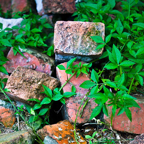 Abandoned  by Lubelter Voy - Artistic Objects Other Objects ( solid, red, grass, green, block, bricks, abandon, construction, material )