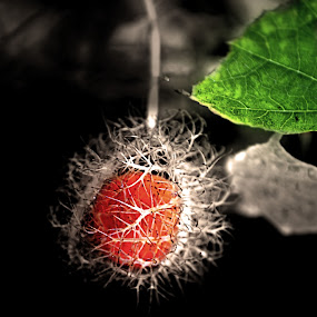 by Bem Beng - Nature Up Close Other Natural Objects