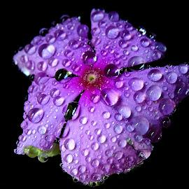 Nayantara  by Asif Bora - Flowers Flowers in the Wild (  )