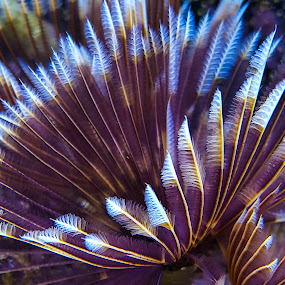 Feather Duster Worm by Bruce Arnold - Nature Up Close Other plants