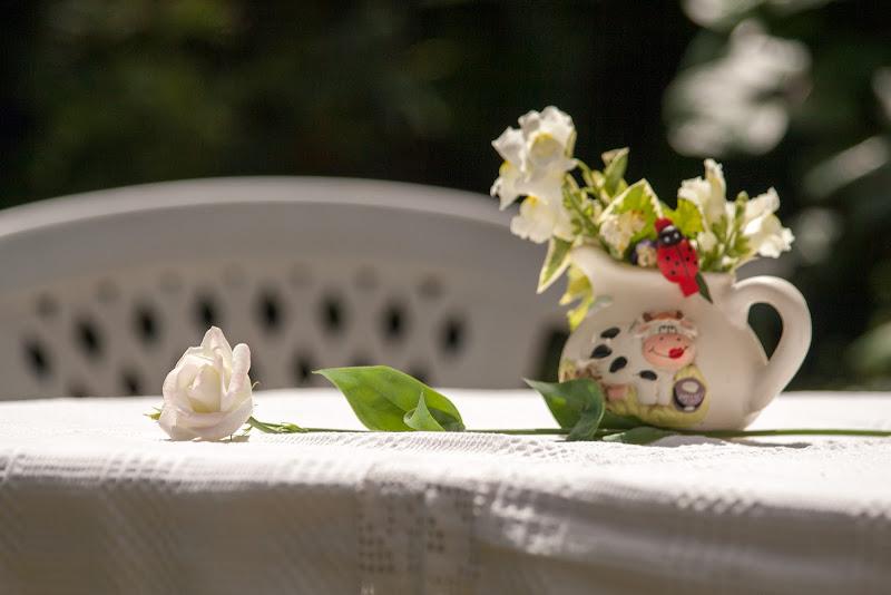 White rose di Andrea Calò