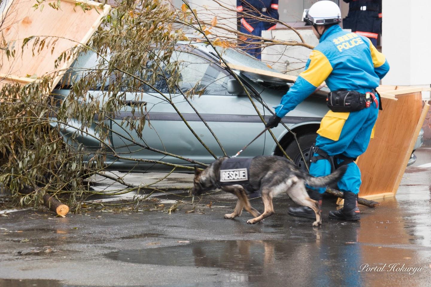 災害救助犬の出動