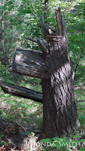 Photo: An odd tree trunk in the end of our hike.