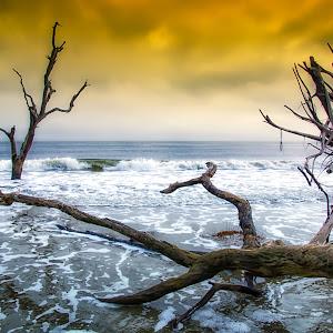 Botany Bay Beach, Edisto, SC Nov15-16NoC.jpg