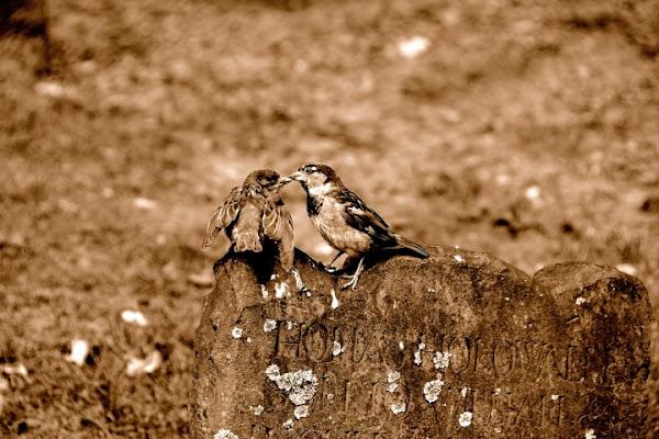 Il Bacio di photofabi77