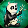 Hungry Panda Jump and Race