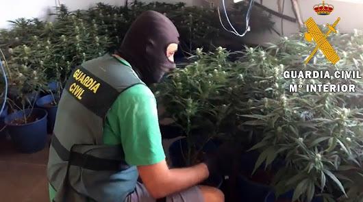 Detenido con un cultivo de 200 plantas de marihuana en una vivienda de Berja