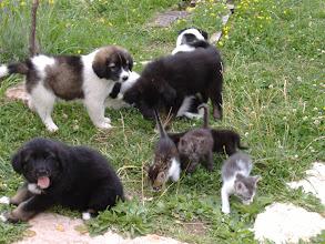 Photo: cani e gatti amici per la pelle
