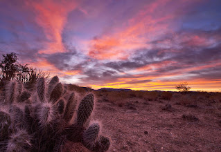 Photo: A CACTUS DREAMS IN COLOR  I took this photo early one morning as I was traveling to the Death Valley G+ Meetup. It was just North of Kingman, Arizona. The colors exploded in the sky so I had to pull off and quickly find a subject. This cactus saw my camera and called me over.