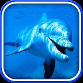Delfiin Liikuv Taustapilt