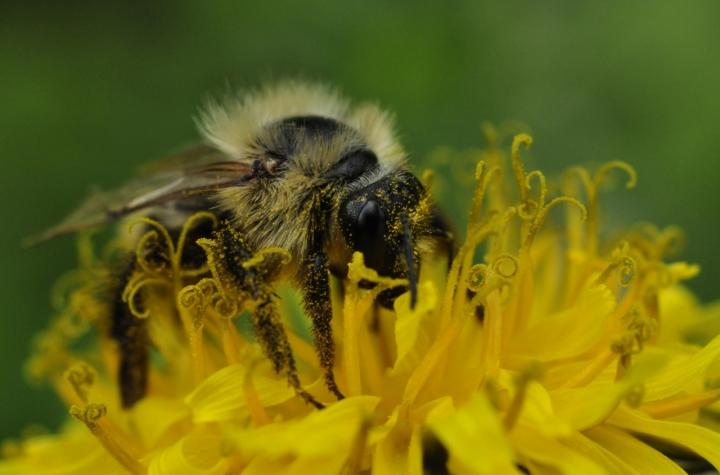 Ecco perchè il miele è giallo... di AlfredoNegroni