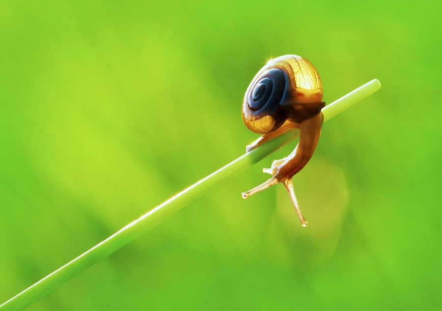 my tail by Aulia Achyar - Animals Insects & Spiders