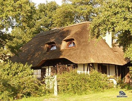 Dom posiadający dach z trzciny w pięknym otoczeniu zielonych starych drzew