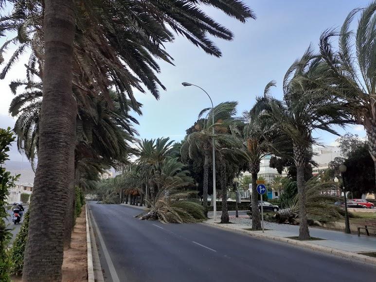 El fuerte viente reinante tumbó palmeras en la Vía Parque.