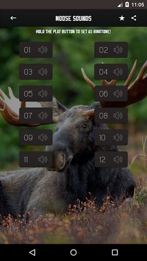 Moose Sounds