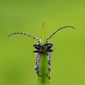 KETAKUTAN by B Iwan Wijanarko - Animals Insects & Spiders