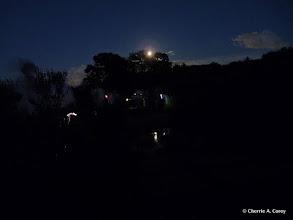 Photo: Rising moon and caterpillar hunters
