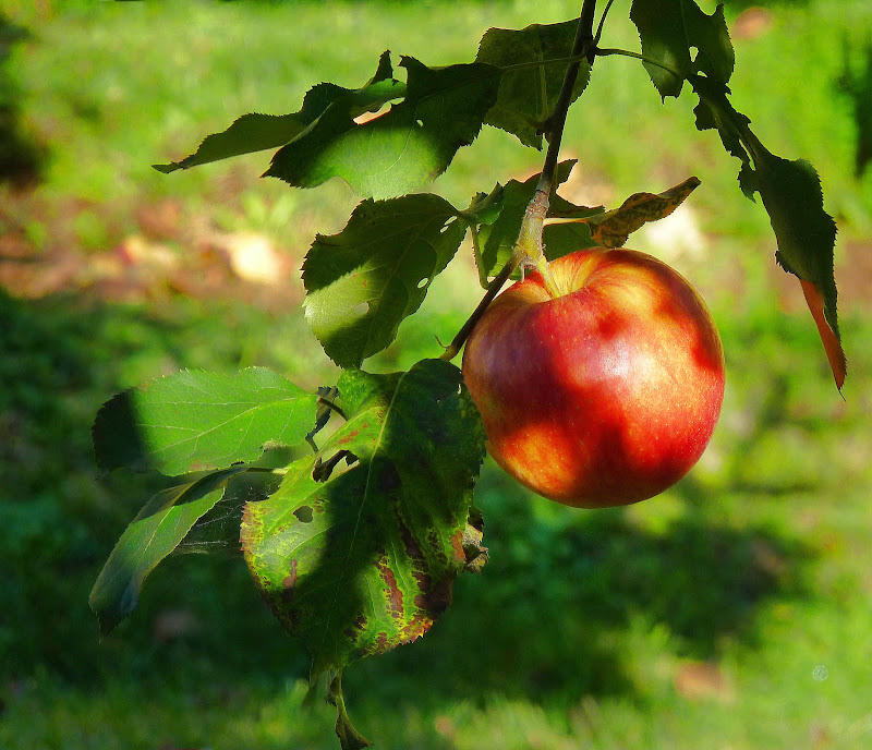 Il tempo delle mele di Justinawind