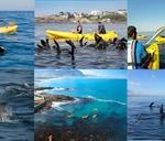 OPEN to ALL – 2 Hour Seal Walker Bay Sea Kayaking Adventure : Walkerbay Adventures