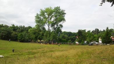 Photo: Baumgruppe bei einem Hof ,Am Plattenberg' (oberes Ende des Grüntals). Davor Weide mit Ziege (und Ponys).