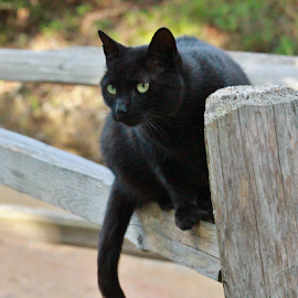 Curious Kitty by Terry Linton - Animals - Cats Portraits (  )