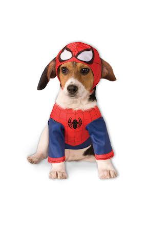 Hunddräkt, Spider-man