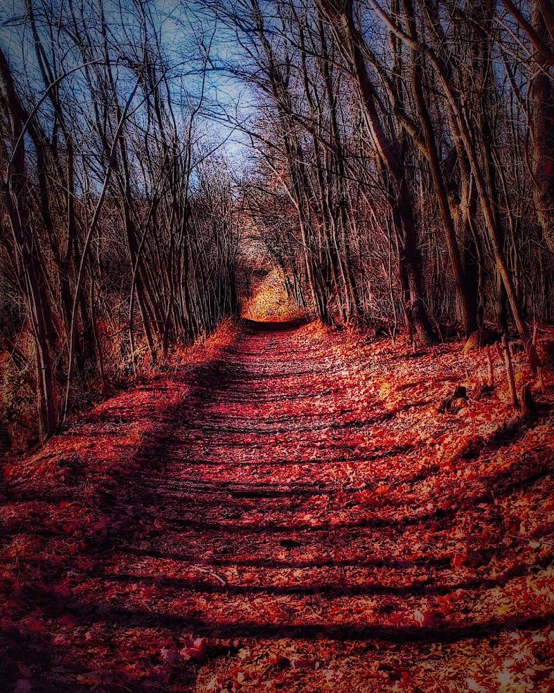 Il sentiero.... di Dayana