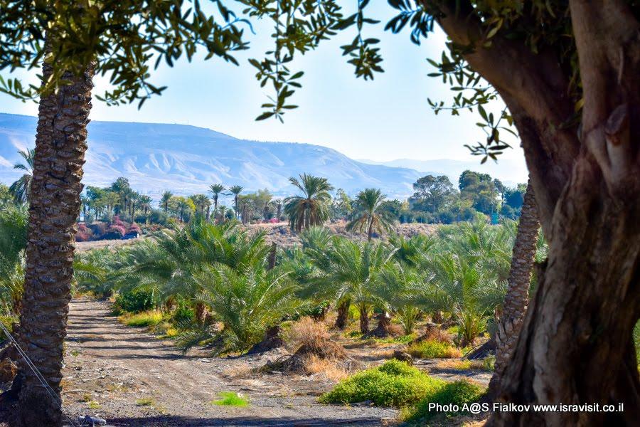 Экскурсия в Израиле. На берегу озера Кинерет. Мошава Кинерет.