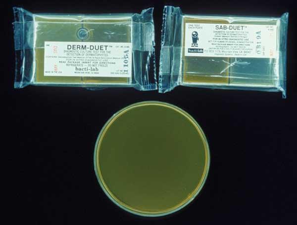 Dermatophyte testing medium.