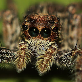 The Eye by Bhavya Joshi - Animals Insects & Spiders ( spider )