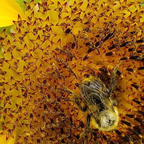 Busy As A Bee by Beth Bowman - Instagram & Mobile Android (  )