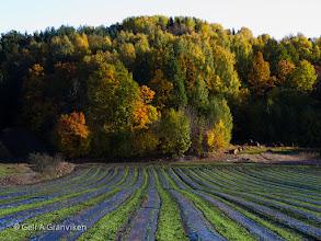 Photo: Autumn in Hyggen