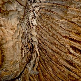 nature's feathers by Megan VanderMeulen - Nature Up Close Trees & Bushes