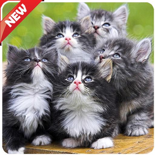 Cute Animal Wallpapers (app)