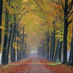 autumn by Hilda van der Lee - Landscapes Forests ( foggy, autumn, forest, beech, lane, colours,  )