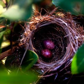 by Mohamad Sa'at Haji Mokim - Nature Up Close Hives & Nests
